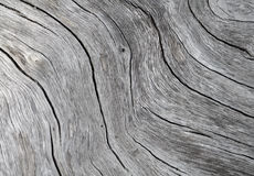 Timber texture close up photo. White and grey wood background. White old tree near the sea. Curves and lines on rustic timber. Rough timber texture. Sea wood Royalty Free Stock Images
