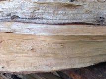 Timber texture Stock Photos