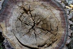 Timber texture. Royalty Free Stock Photos