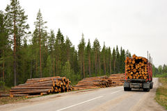 Timber. Transporting harvested timber in scandinavian forest Royalty Free Stock Image