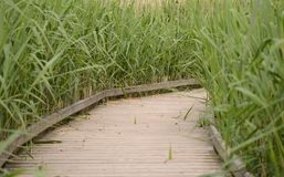 Timber walkway in field Royalty Free Stock Images