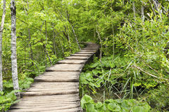 Timber walkway in forest in Plitvice, Croatia Royalty Free Stock Photography