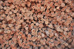 Timber - Eucalyptus Stock Images