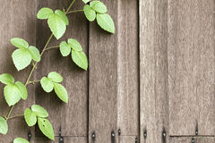 Timber wall  texture & wild vine leaves Royalty Free Stock Photos