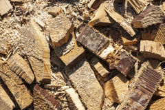 Timber waste Stock Photography