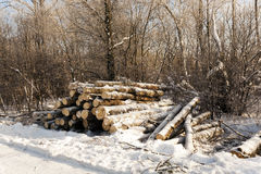 Timber in the winter Royalty Free Stock Images