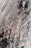 Timber wood detail macro old and dried hardwood texture Royalty Free Stock Images