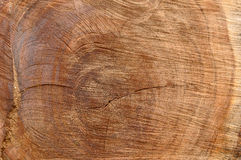 Timber wood. Grain texture background Royalty Free Stock Photography