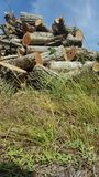 Timber wood manpower nature destruction royalty free stock photos