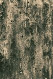 Timber wood wall texture background. WOODEN TEXTURE OF AN OLD TREE Stock Image