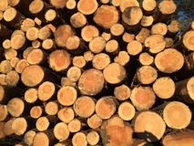 Timber in the woods Royalty Free Stock Image
