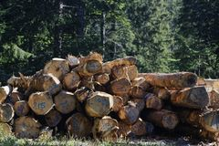 Timber in the woods Stock Photography