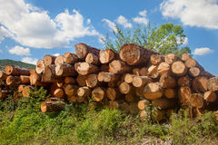 Timber works log pile Royalty Free Stock Images