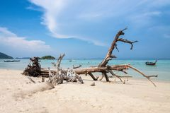 Timber wreck on the beach Royalty Free Stock Photos
