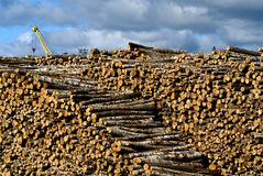 Timber yard Royalty Free Stock Images