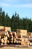 Timber yard and forest. Stacked logs, cut timber and a pine forest, the whole forestry industry Royalty Free Stock Photos