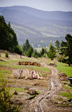 Timber yard in the Low Tatra mountains Royalty Free Stock Photos