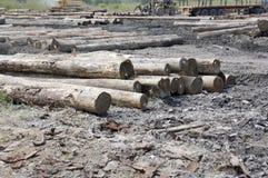 Timber yard Royalty Free Stock Photo