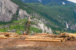 Timber Yard Stock Image