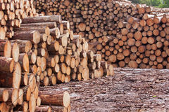 Timber Yard Scene Stock Photo