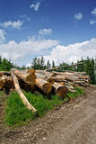 timbers Photographie stock libre de droits