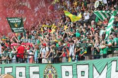 Timbers Army flags Stock Photography