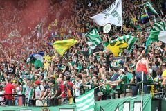 Timbers Army flags Royalty Free Stock Image