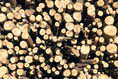 Timbers Stock Photography