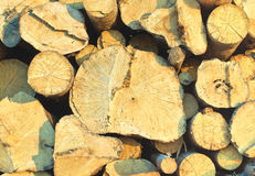 Timbers Stock Images