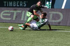 Timbers fall Royalty Free Stock Images