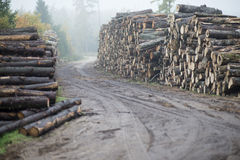 Timbers. Industry trees cut wood Royalty Free Stock Images