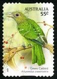Timbre-poste australien de Catbird vert Photos libres de droits