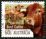 Timbre-poste australien de cheptels bovins Photos libres de droits