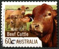 Timbre-poste australien de cheptels bovins Image libre de droits