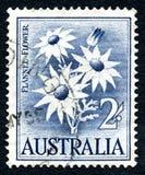 Timbre-poste australien de fleur de flanelle Images libres de droits