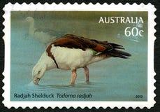 Timbre-poste australien de tadorne de Radjah Photo stock