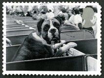 Timbre-poste BRITANNIQUE de chien de boxeur Photo libre de droits