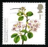 Timbre-poste BRITANNIQUE de poire de Plymouth Image stock