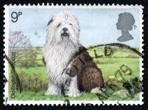 Timbre-poste BRITANNIQUE de vieux chien de berger anglais Images stock