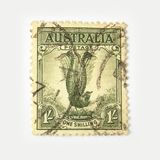 Timbre-poste de l'Australie avec le lyrebird Images stock