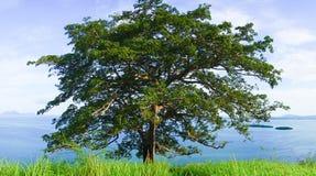 Timbun Mata Island arkivbilder