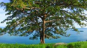 Timbun Mata Island royaltyfri bild
