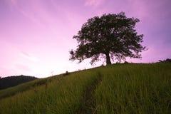 Timbun Mata Island arkivfoto