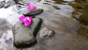 Time. Two blossoms on pebbles in a river Stock Photos