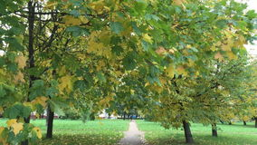 The time of autumn in the city Park stock video footage
