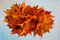 The time of autumn. Autumn wreath of beautiful colorful maple leaves. royalty free stock image