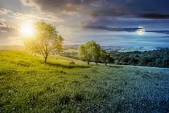 Row of trees on grassy slope through the time. Time change concept. row of trees on grassy slope. lovely countryside in summer Royalty Free Stock Photo