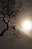 Time of dreams...tree and a mystical sun. Landscape with a hazy, dreamlike sun Royalty Free Stock Photos