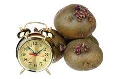 Time för att plantera potatisar Royaltyfria Foton