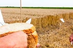 Time för bröd Royaltyfri Foto